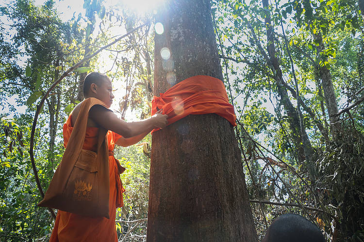 Eleven days after signing CF agreement, Phnom Ses community ordained 51 trees
