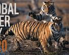 Global Tiger Day, 2020