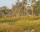 Dry forest in southern Laos