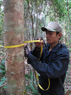 Measuring trees for forest biomass plots, XePian NPA, Southern Laos