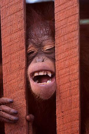 © ? Alain Compost / WWF