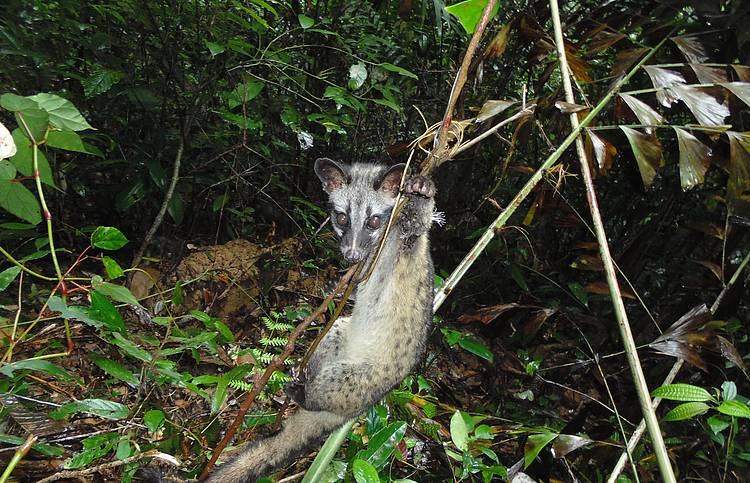 Staggering number of snares are decimating wildlife in Greater Mekong countries