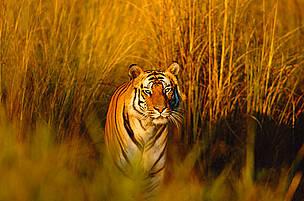 © naturepl.com/Francois Sevigny / WWF